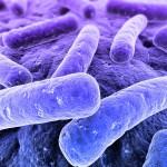 legionella-bacteria1